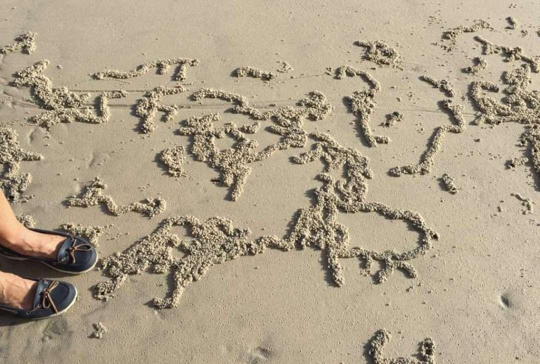 Mud crab artworks