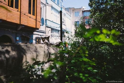 istanbul-462_b