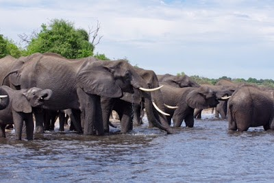 15.11. Am Chobe River
