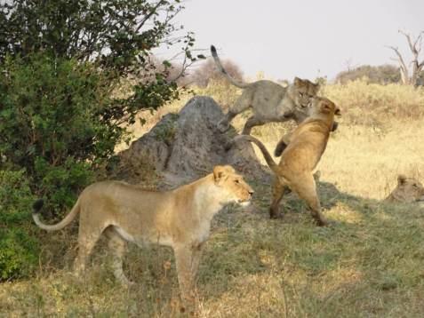 Abenteuer Botswana