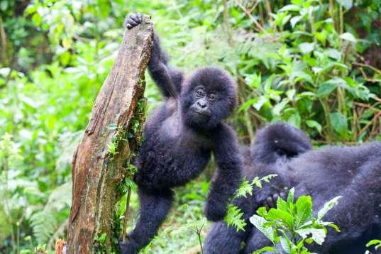 Uganda auf unbekannten Pfaden