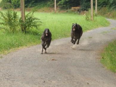 Dobby (Barneby Pinehurst) und Caileigh rennen