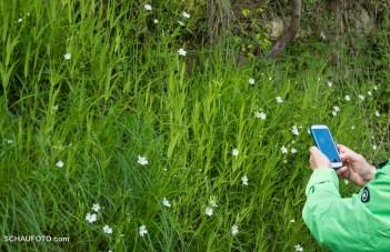 Pflanzenbestimmung per App
