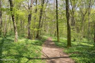 Leißlinger Wald