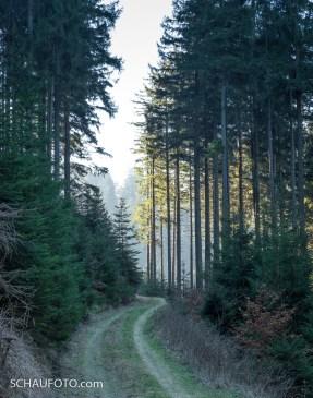 Thüringer Wald I