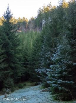 Thüringer Wald III