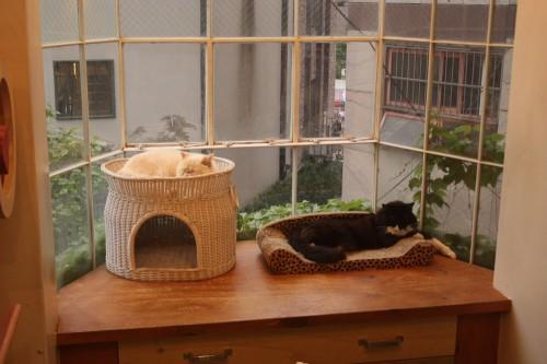 Cats Living-5