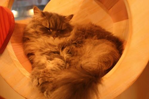 Cats Living-7