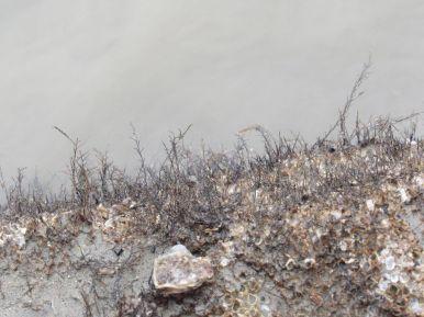 hydrozoa-007-foto-frank-wagemans