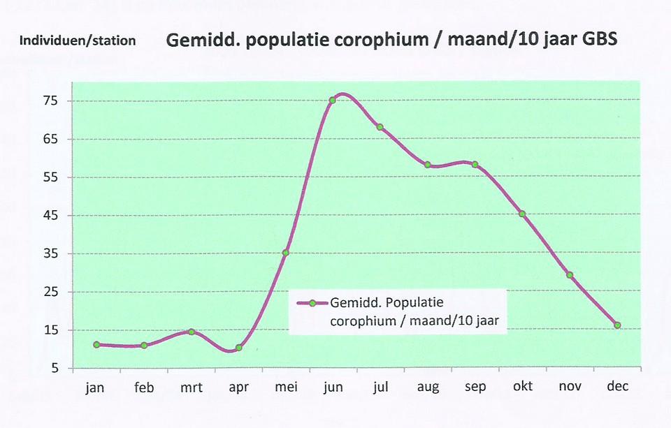 slikgarnaal-populatie-per-maand--hug-van-beek
