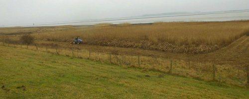 Maaibeheer zilt grasland