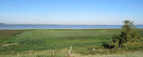 Iemand het zilt grasland nog gezien?