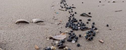 Plastic afval en het dierenleven op zee