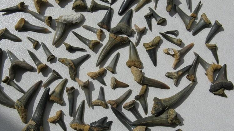 Op zoek naar fossielen in de stad – en thuiskomen met een halve walvis!