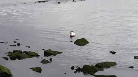 20180624--rotterdam--olielekkage--foto-ard-quack--007.jpg