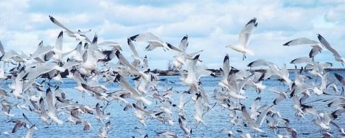 Hoe vogels in zwermen vliegen
