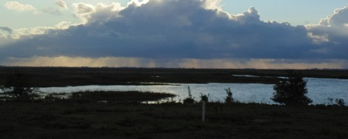 Het Verdronken land van Saeftinghe: de laatste delta van Nederland