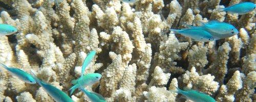 Ocean acidification is having major impact on marine life