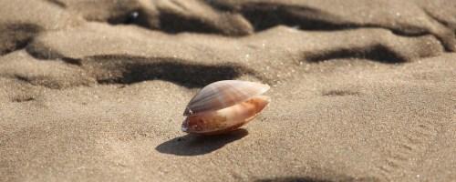 Onderzoekers brengen Waddenzee met hapjes uit zeebodem in kaart
