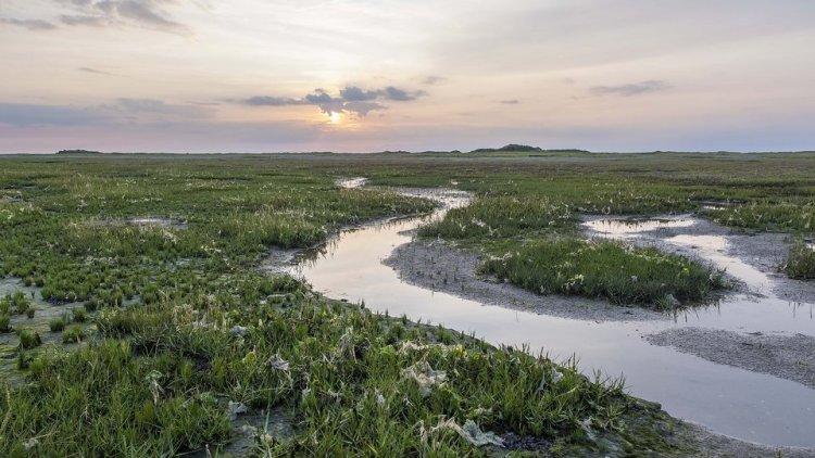 Kwelderareaal in de Waddenzee neemt toe, zeespiegelstijging vormt risico
