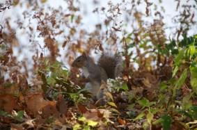 Squirrel 003