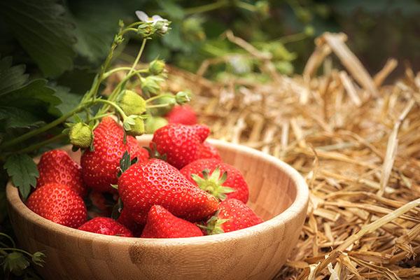 Erdbeeren in Holzschale