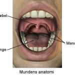 Have your tonsils removed – what happens then?