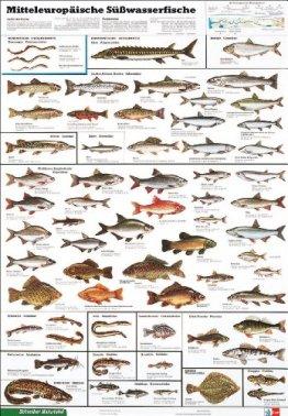 Mitteleuropäische Süsswasserfische: Schreiber Naturtafeln, Mitteleuropäische Süßwasserfische (Klett-Perthes Naturtafeln) -