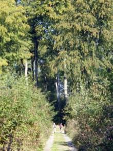 Kleine Menschen, große Bäume.