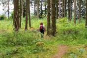 7-Einsame-Waldpfade-im-Königsfenn