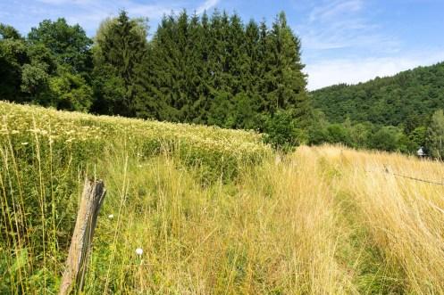 Im grünen Bachtal (1)