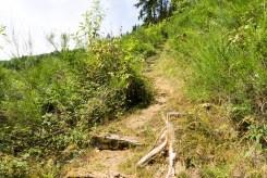 Im grünen Bachtal (3)