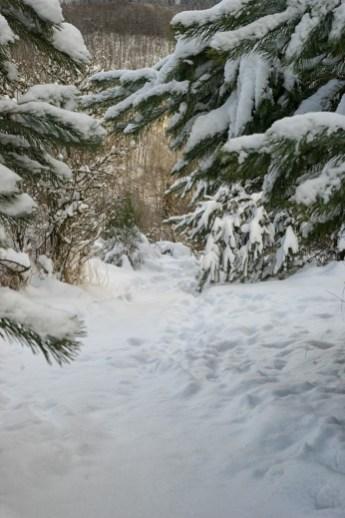 Traumpfad Bergheidenweg (14)