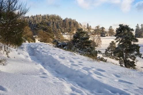 Traumpfad Bergheidenweg (32)