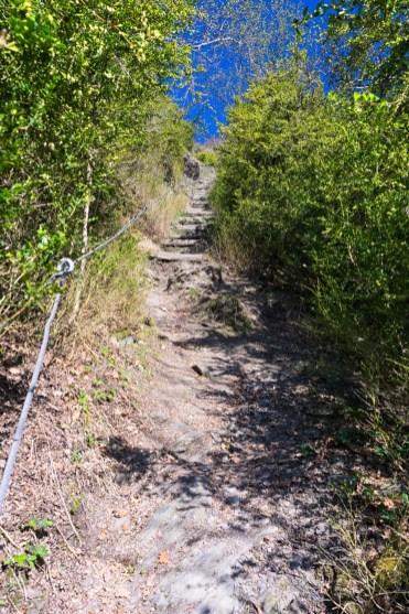 Buchsbaum-Wanderpfad (12)