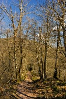 Buchsbaum-Wanderpfad (23)