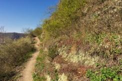 Buchsbaum-Wanderpfad (3)