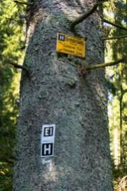 Knickenhagen-Route bei den Externsteinen (10)