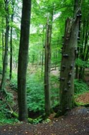 Naturschutzgebiet Schluchten und Moore im Furlbachtal (1)