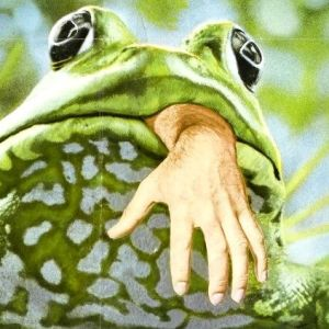 Frogs-icon