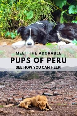 Pups of Peru Pinterest Pin
