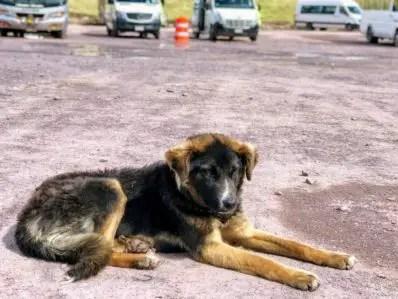 Pups of Peru| Rainbow Mountain