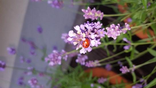 Ein bienenfreundlicher Garten ist wunderschön