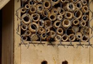 Das Gitter vor einem Insektenhotel schützt vor Feinden wie Vögeln.