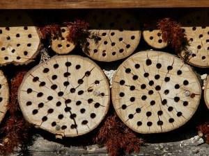 Als Insektenhotel können auch einfach Holzstämme angebohrt werden.