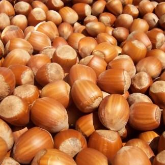 Fresh Hazelnuts, In Shell