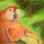 Colored Pencil Rendering of Macaw by Steven Walker.