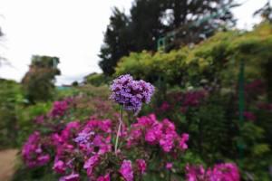 Parc de Claude Monet (3)