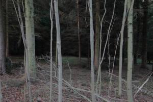 Söhrer Forst (5)
