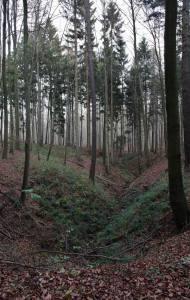 Söhrer Forst (8)